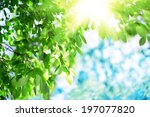 sun and green leaves. green... | Shutterstock . vector #197077820