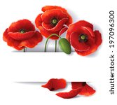 Red Poppy Flowers With Space...