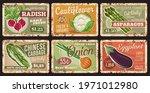 vegetables rusty metal plates ... | Shutterstock .eps vector #1971012980