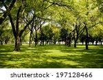 Beautiful Green Grassy Area...