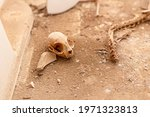 Remains Of A Dead Cat Skull On...