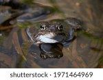 A Closeup Macro Shot Of A Frog...