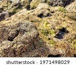 A Closeup Shot Of Moss Covered...