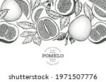 hand drawn sketch style pomelo... | Shutterstock .eps vector #1971507776