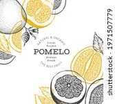 hand drawn sketch style pomelo... | Shutterstock .eps vector #1971507779