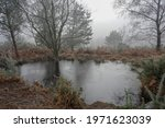 Misty Pond In The Middle Of...