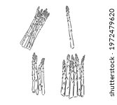 spring asparagus hand drawn... | Shutterstock .eps vector #1972479620