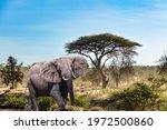The Big Elephant And Plain...