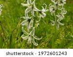 White Spring Flowers Blossom Of ...