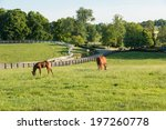 mare with her colt in pastures... | Shutterstock . vector #197260778