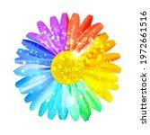 Beautiful Rainbow Daisy Flower  ...