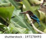 white throated kingfisher | Shutterstock . vector #197278493