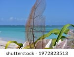 Sea Fan Coral Decoration On The ...