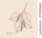 hand drawn birch branch...   Shutterstock .eps vector #1972850660