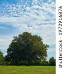 A Strong  Tall  Mature Tree In...