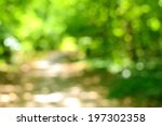Blurred Forest Background ...