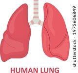 human lung  human lung anatomy  ...   Shutterstock .eps vector #1973606849