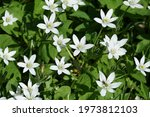 White Flowers Called...
