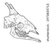 Giraffe Fossilized Skull Hand...