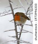 Cute Little Bird In Cold Winter