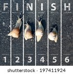 snail run near the finish line | Shutterstock . vector #197411924
