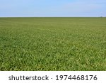 Lush Green Agricultural Land...