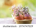 Purple Cabbage In Eggs Shell....