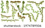 tropical hanging vines. jungle... | Shutterstock .eps vector #1974789506