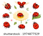 red ladybugs. view nature bugs... | Shutterstock .eps vector #1974877529