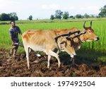 Camodian Local Farmer Ploughin...