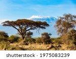Plain Acacias Of The Horn Of...