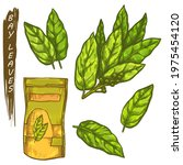 bay leaves icons  sketch spices ... | Shutterstock .eps vector #1975454120