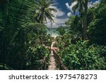 Pathway In Tropical Jungle. Way ...