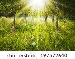 beautiful landscape   summer... | Shutterstock . vector #197572640
