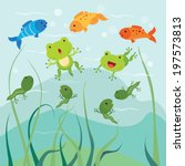 Tadpoles And Little Froglets....