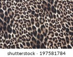 Tiger Strip Texture