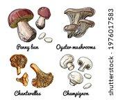 vector food icons of mushrooms. ... | Shutterstock .eps vector #1976017583