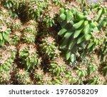 Cute Green Spike Cactus...