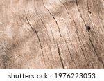 Ladybug On Wooden Texture...
