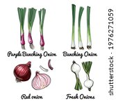 onions. vector food icons of... | Shutterstock .eps vector #1976271059