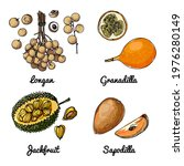 vector food icons of fruits.... | Shutterstock .eps vector #1976280149