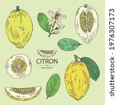 collection of citron  fruts ... | Shutterstock .eps vector #1976307173
