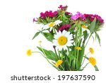beautiful wildflowers isolated... | Shutterstock . vector #197637590