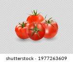 tomato set. red tomato... | Shutterstock .eps vector #1977263609