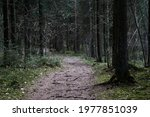 Path Through The Forest Trees ...