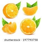 vector collection of fresh ripe ... | Shutterstock .eps vector #197793758