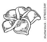 plumeria open buds. traditional ... | Shutterstock .eps vector #1978031549
