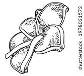 plumeria open buds. traditional ... | Shutterstock .eps vector #1978031573