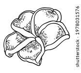 plumeria flower design.... | Shutterstock .eps vector #1978031576