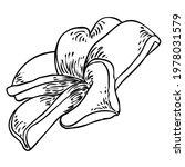 plumeria open buds. traditional ... | Shutterstock .eps vector #1978031579